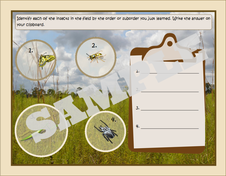 Bugging Around Insects - An insect unit study for school & homeschool